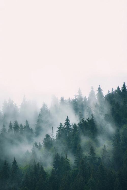 Fog and forest Fotobehang