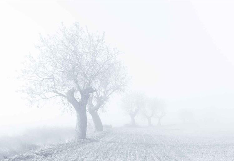 Foggy Sunday Fotobehang