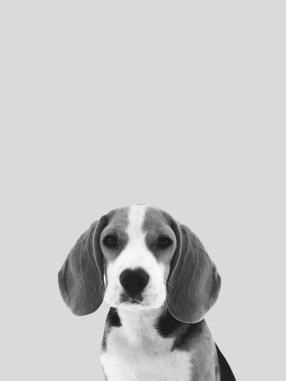 Grey dog Fotobehang