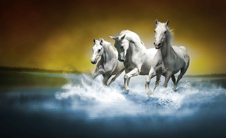 Horses Fotobehang