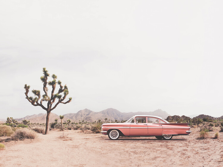 In the desert Fotobehang