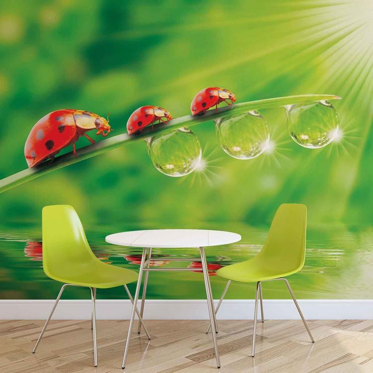 Ladybird Fotobehang