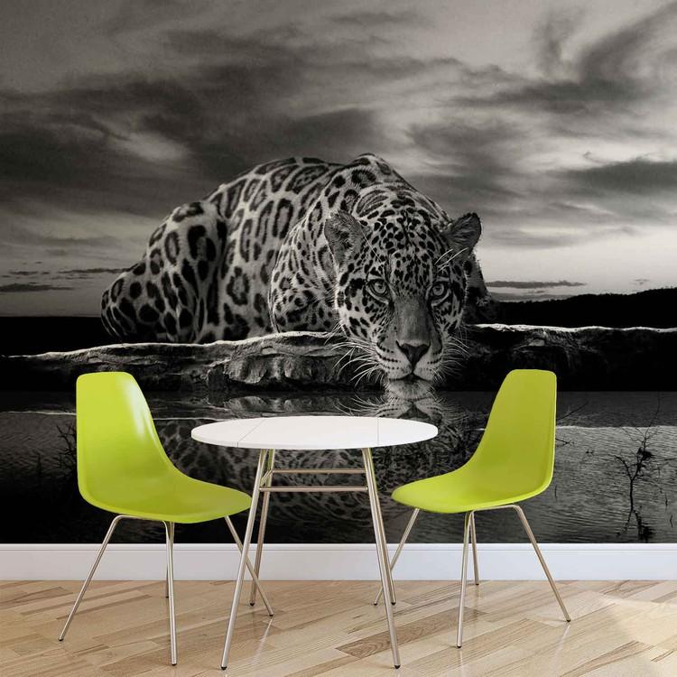 Leopard Feline Reflection Black Fotobehang