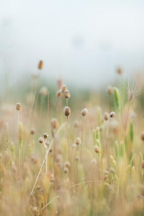 Pastel colour plants Fotobehang