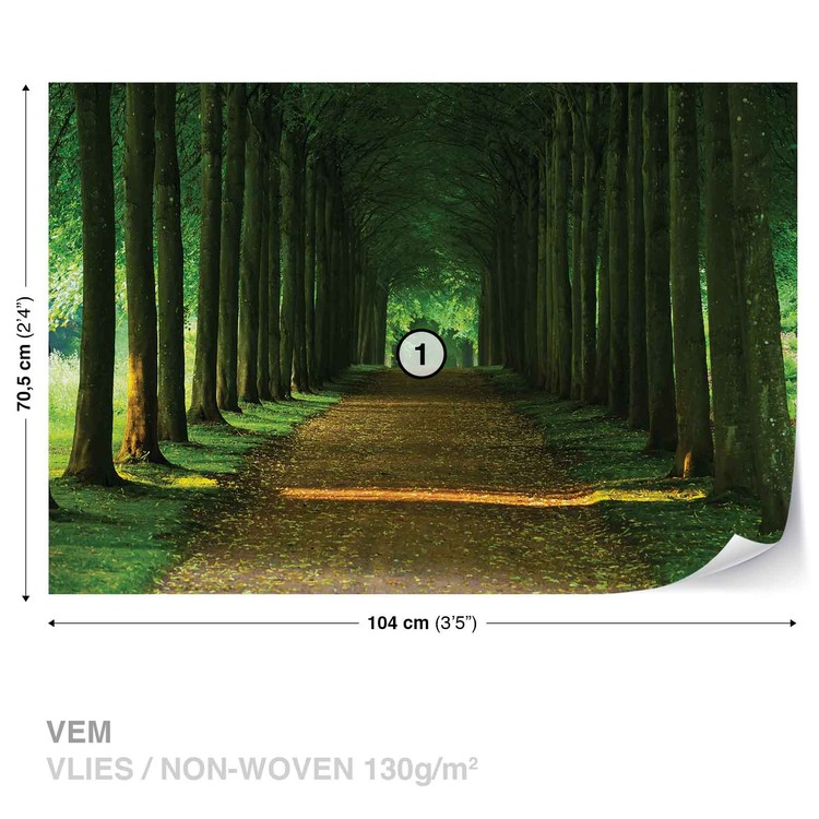 Path Trees Forest Nature Fotobehang