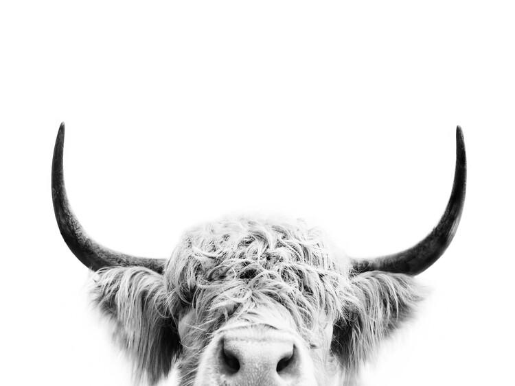 Peeking cow bw Fotobehang