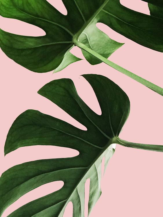 Pink palm Fotobehang