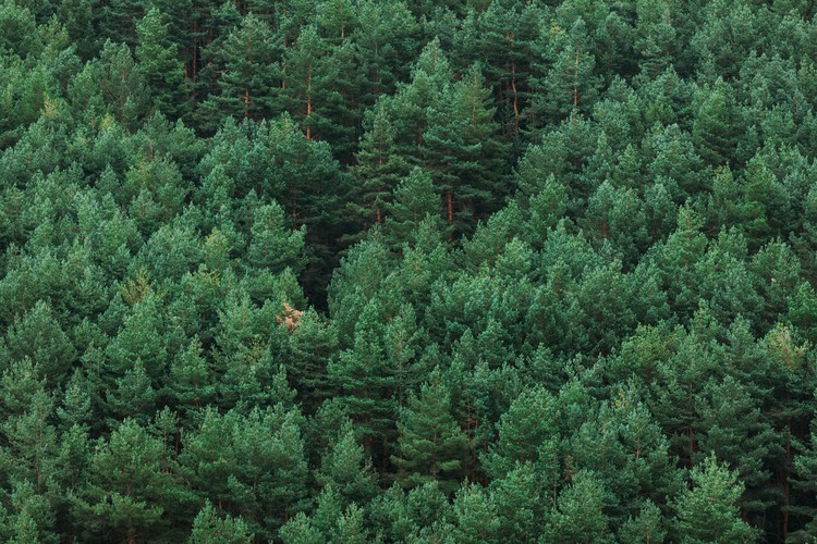 Random woods Fotobehang