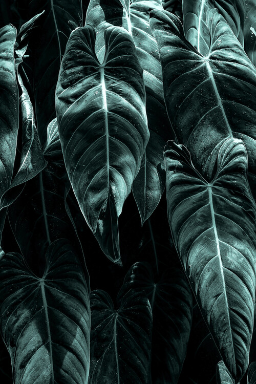 The Jungle Fotobehang