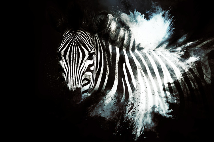 The Zebra II Fotobehang