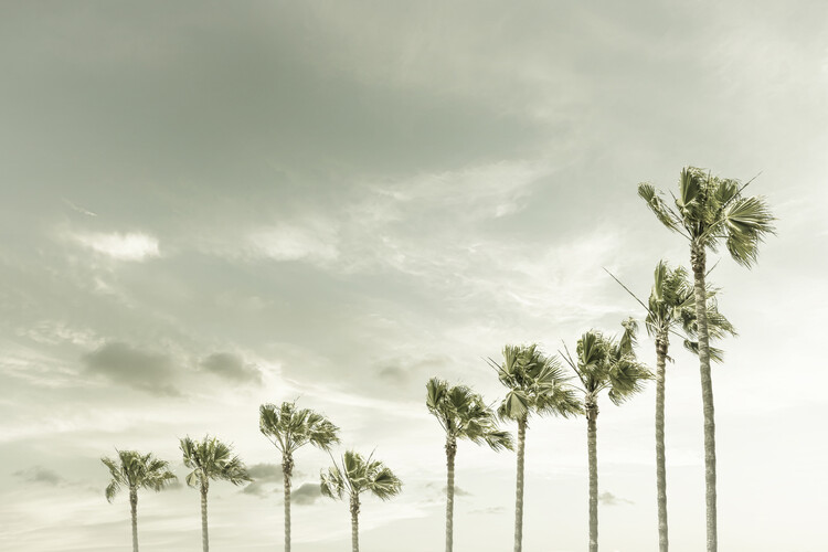 Vintage Palm Trees at the beach Fotobehang