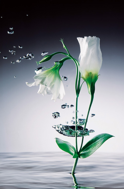WEI YING WU - crystal flowers Fotobehang