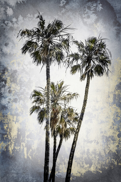 Fotografia artystyczna MODERN ART Lovely Palm Trees