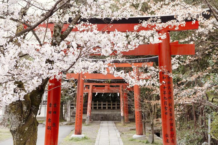 Fotografia artystyczna Yoshida Shrine Torii