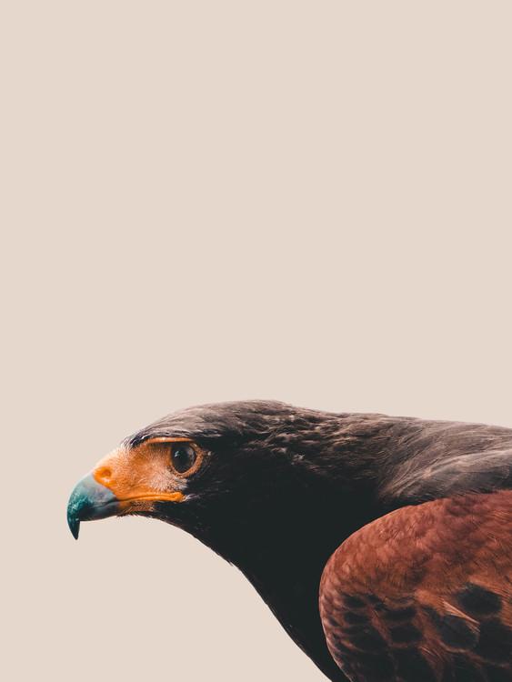 Fotografia artystyczna Bird of prey