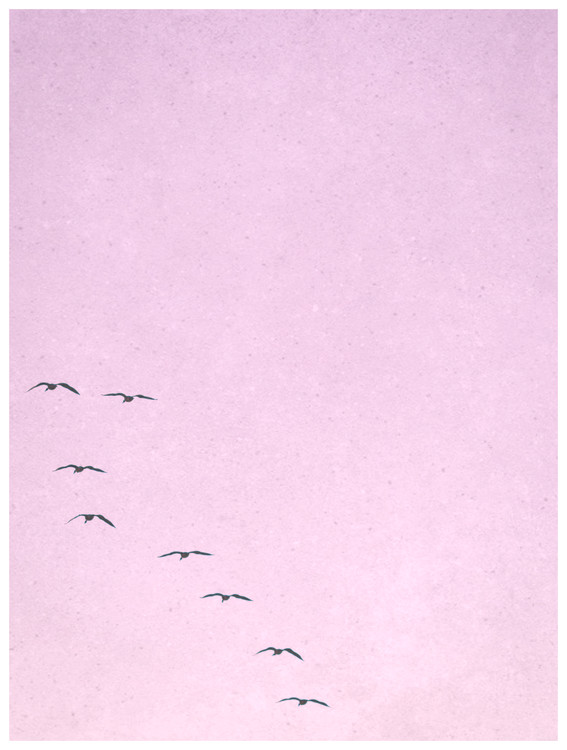 Fotografia artystyczna borderpinkbirds