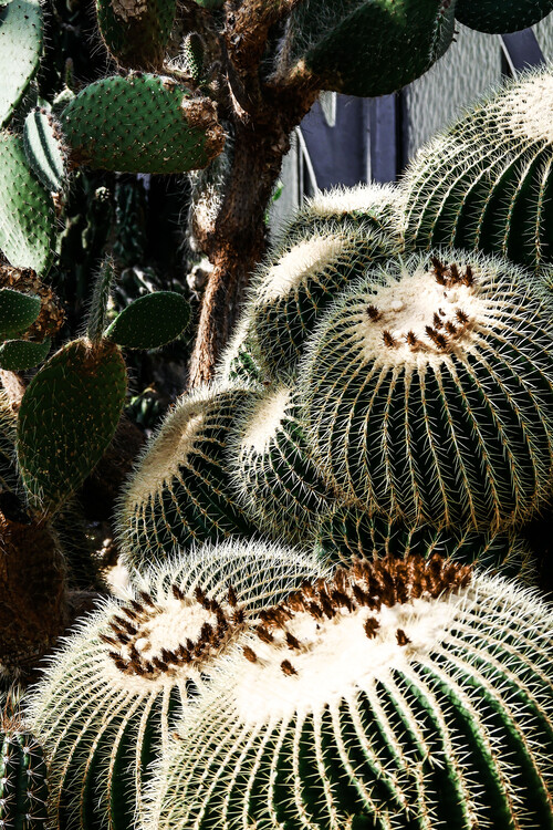 Fotografia artystyczna Cactus