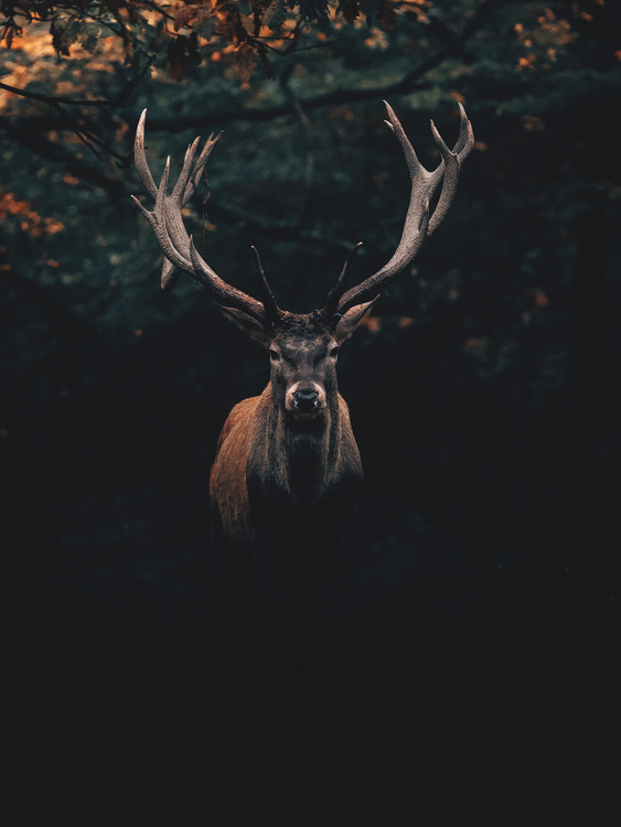 Fotografia artystyczna Deer1