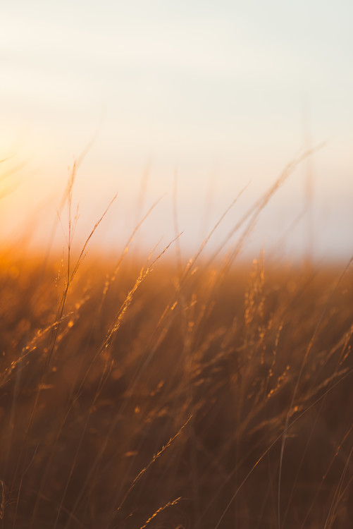 Fotografia artystyczna Last sunrays over the dry plants