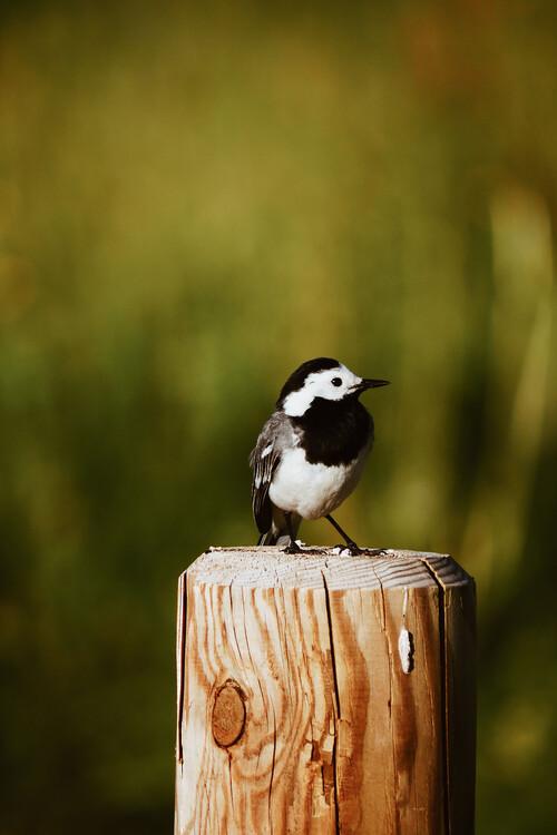 Fotografia artystyczna Little Bird friend