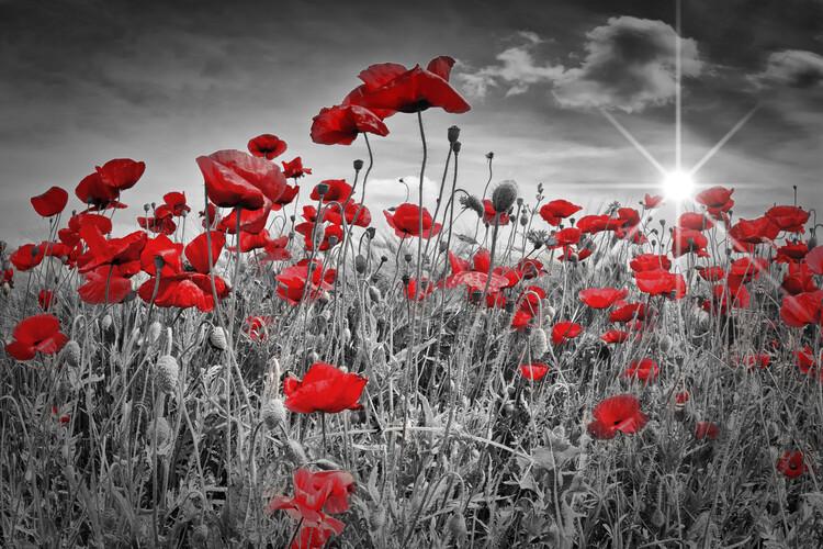 Fotografia d'arte Idyllic Field Of Poppies With Sun