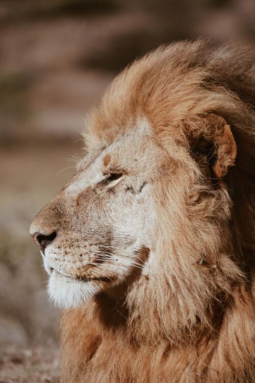 Fotografia d'arte Lion King