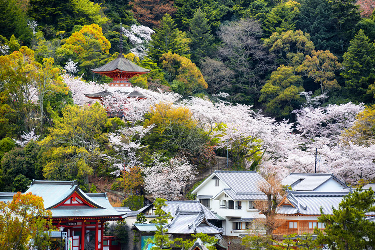 Fotografia d'arte Miyajima Pagoda Cherry Blossom