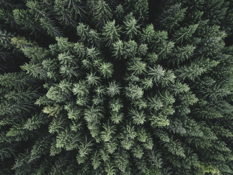 Fotografia d'arte Moody forest from above