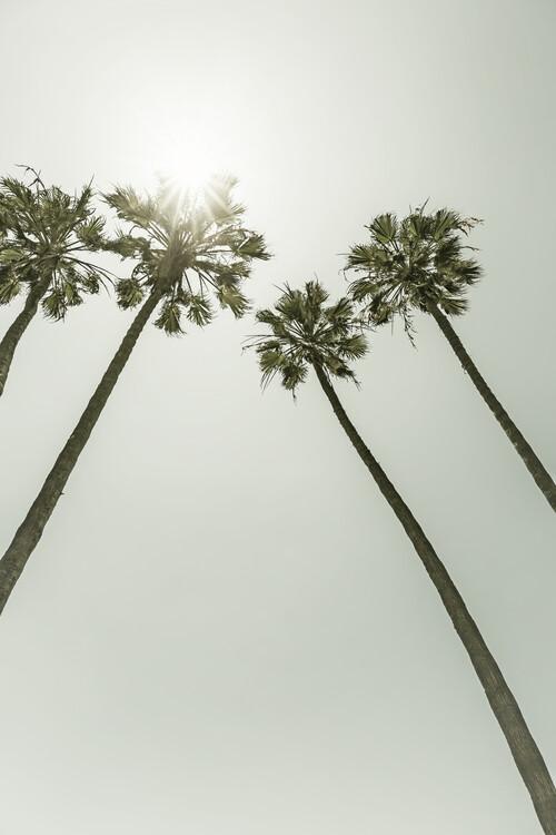 Fotografia d'arte Palm Trees in the sun | Vintage