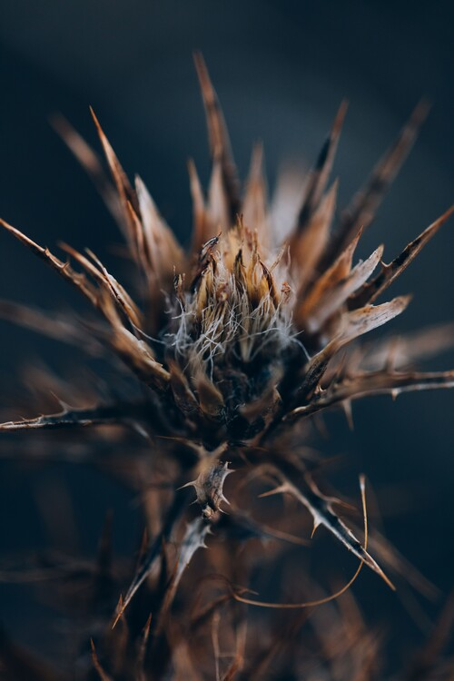 Fotografia d'arte Plants and flowers at golden hour 4