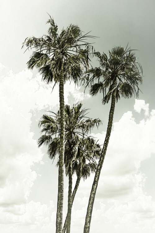 Fotografia d'arte Vintage palm trees summertime