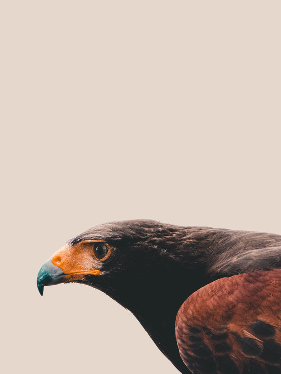 Fotografia d'arte Bird of prey