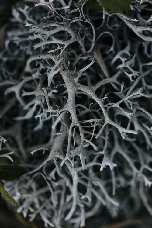 Fotografia d'arte Dry plants from the forest