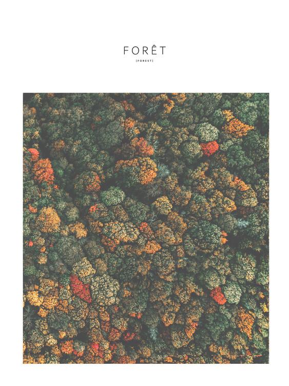 Fotografia d'arte foret4