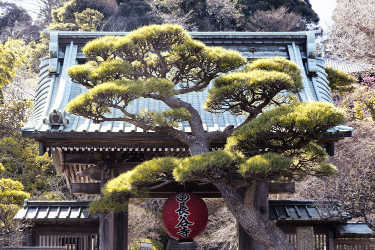Fotografia d'arte Japonese Temple