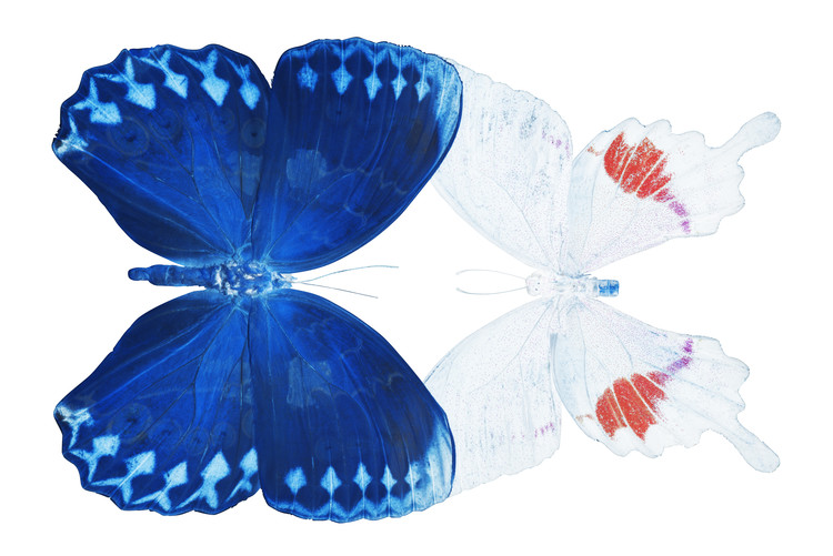 Fotografia d'arte MISS BUTTERFLY DUO FORMOHERMOS - X-RAY White Edition