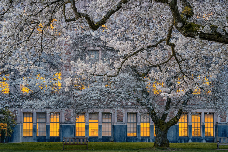 Fotografia d'arte Morning at University of Washington