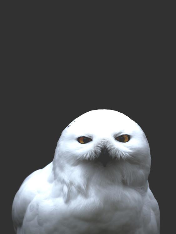 Fotografia d'arte owl2