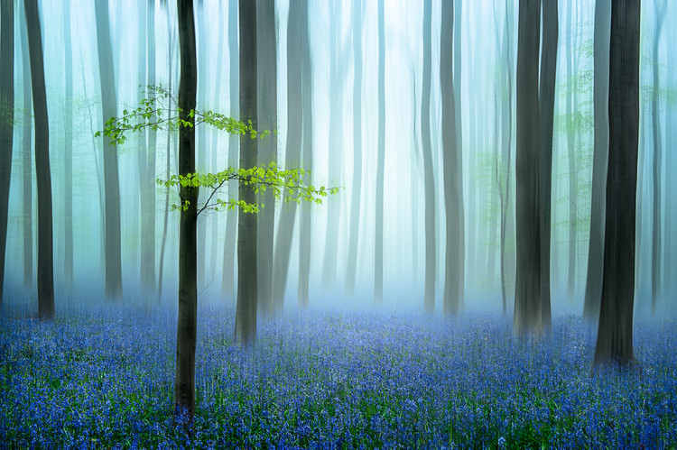 Fotografia d'arte the blue forest ........