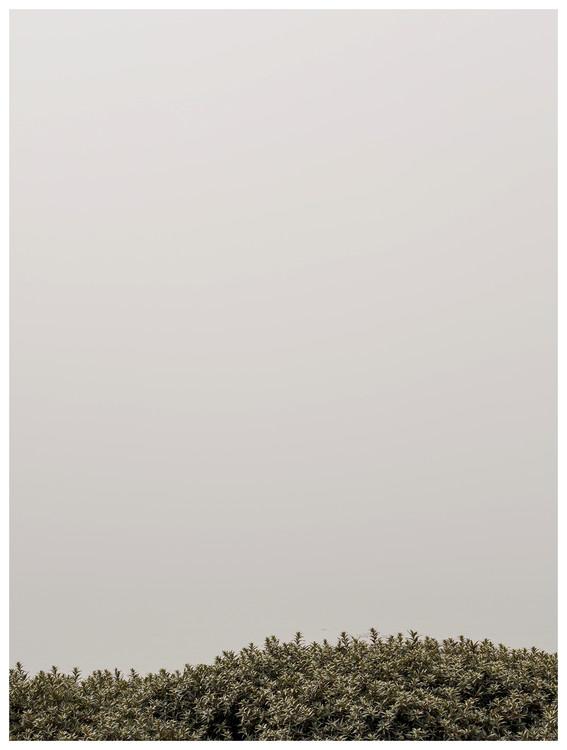 Fotografia d'arte tree tops