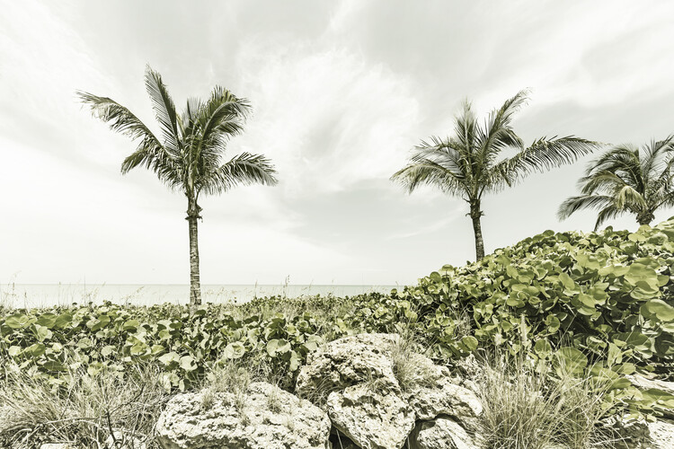Fotografii artistice Captiva Island | Vintage