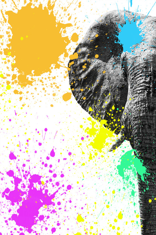 Fotografii artistice Elephant Portrait II