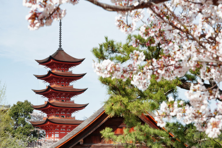 Fotografii artistice Miyajima Pagoda with Sakura