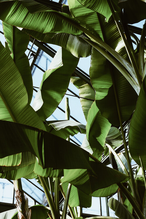 Fotografii artistice Roof of palms