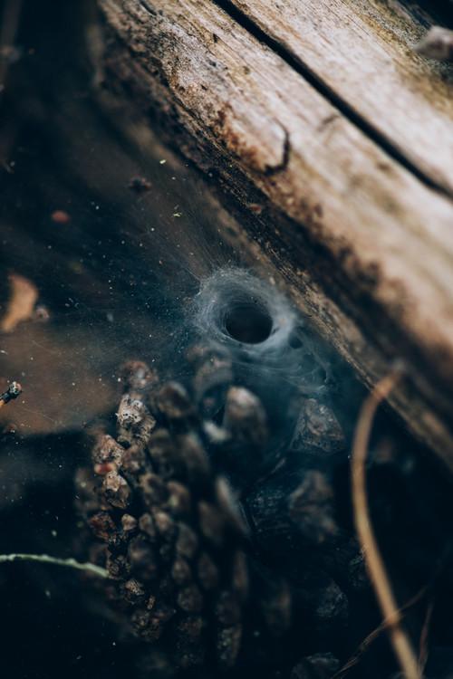 Fotografii artistice Spider hole between wood