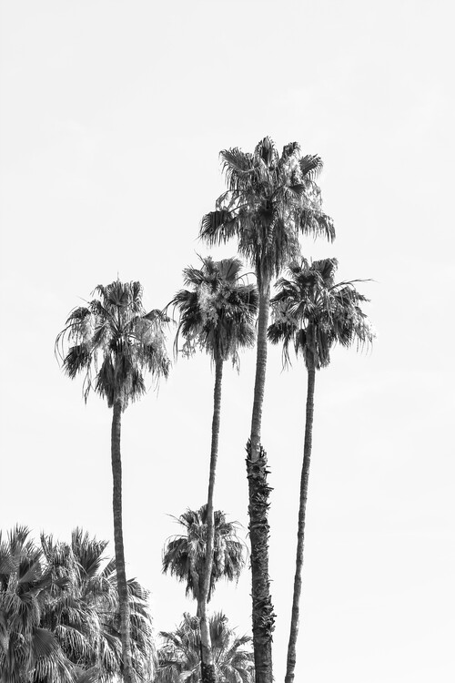 Fotografii artistice Palm trees by the sea