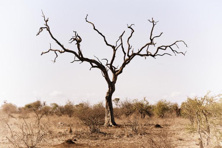 Fotografii artistice Savannah Tree