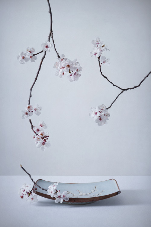 Fotografii artistice The First Cherry Blossom