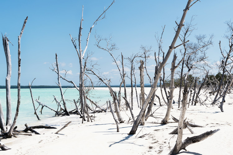 Fotografii artistice Tropical Wild Beach