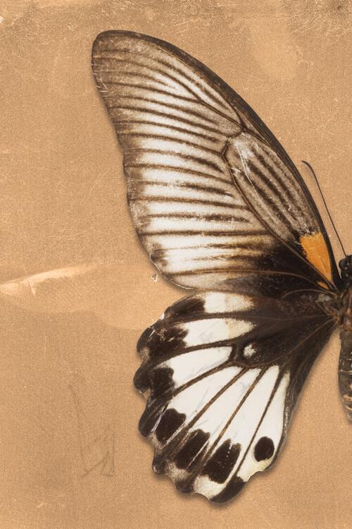 Ekskluzivna fotografska umetnost AGENOR PROFIL - ORANGE